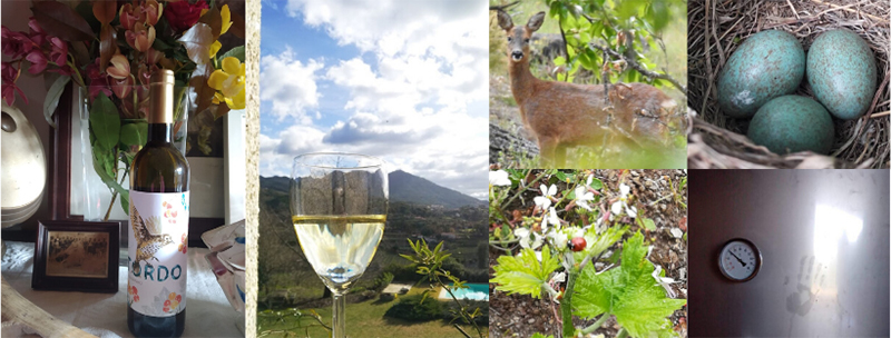 Carneiro Family Wines