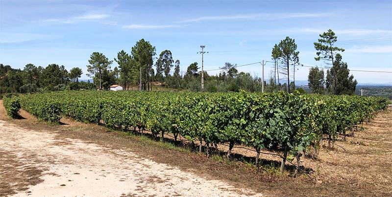Vinhos Donnaires